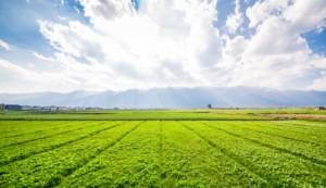 เกษตรทฤษฎีใหม่